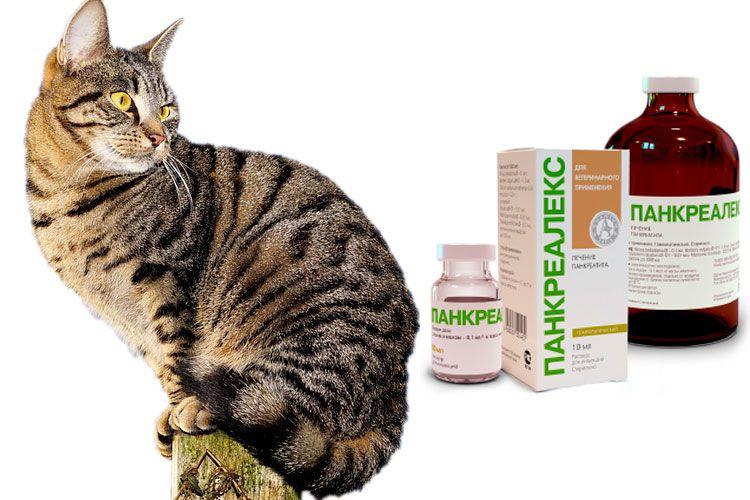 Панкреалекс для кошек