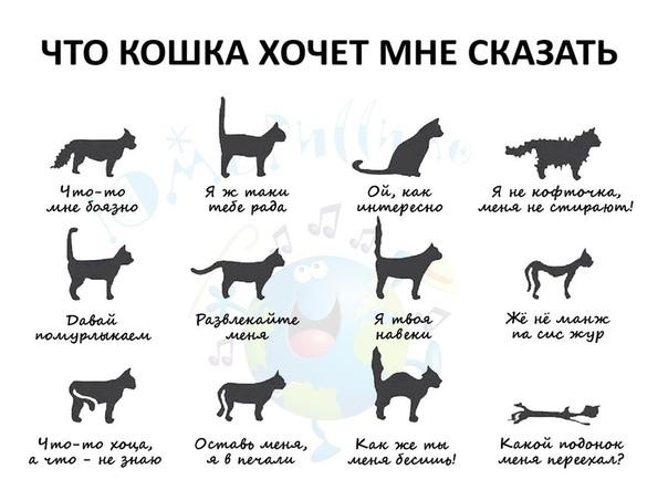 Какой должен быть нос у здоровой кошки: сухой или горячий
