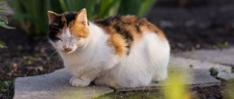 Можно ли мыть кошку обычным шампунем
