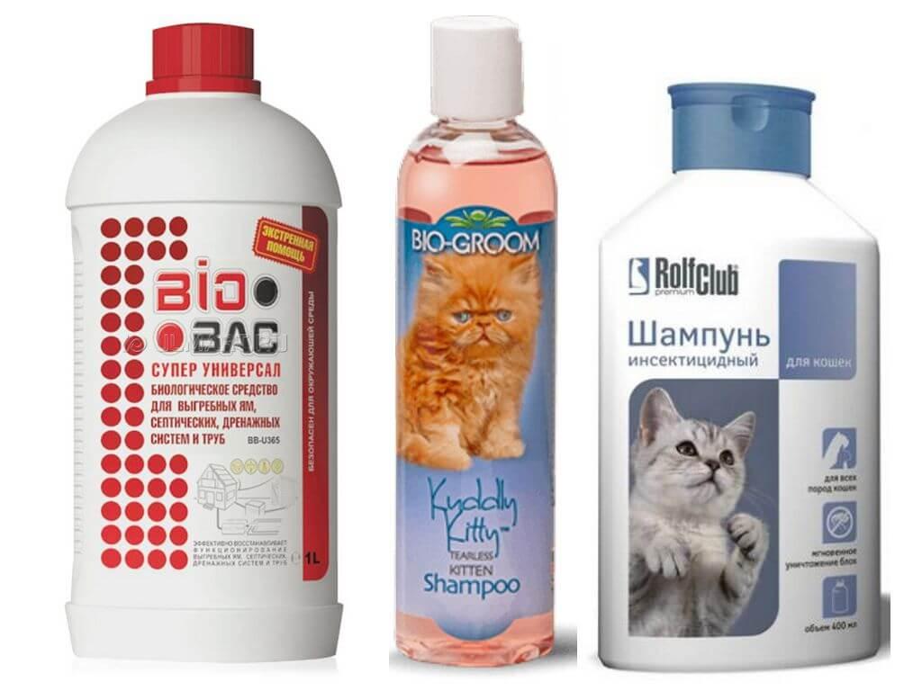Шампуни от блох для кошек: выбираем и используем правильно