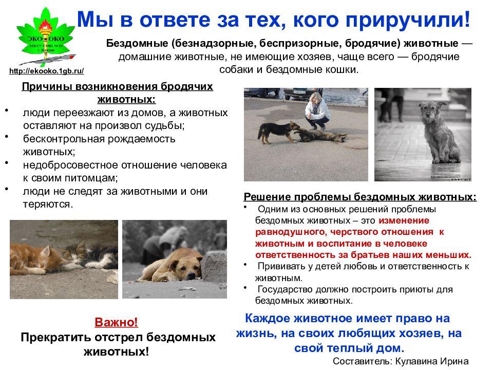 Почему собака ест землю на улице: причина