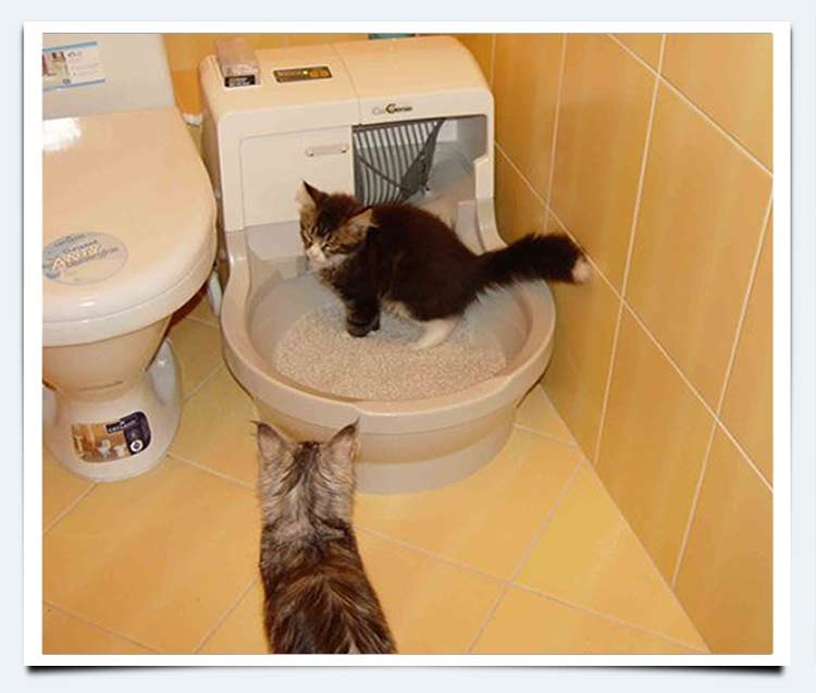 Проблемы с мочеиспусканием у котов, кошек и котят