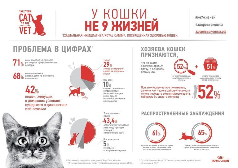 Девять жизней: составлен рейтинг самых частых болезней кошек и собак