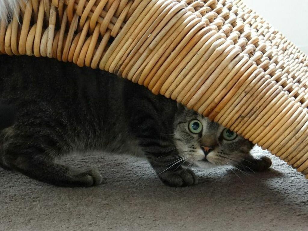 Кошка прячется в темные места — основные причины и что делать хозяину