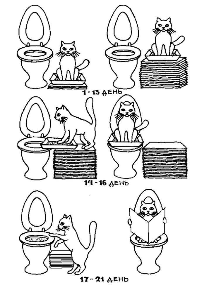 Как правильно и быстро приучить котёнка или кошку к горшку