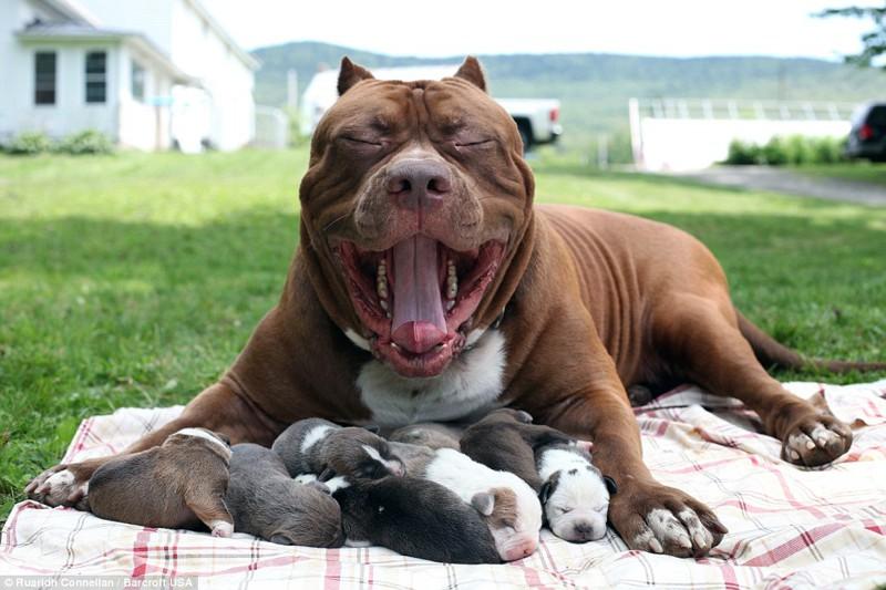 Смешные породы собак: самые прикольные в мире