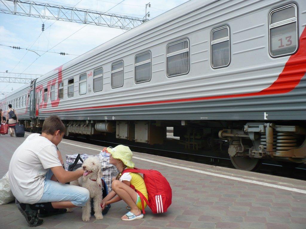 Как перевозить собаку в поезде и электричке