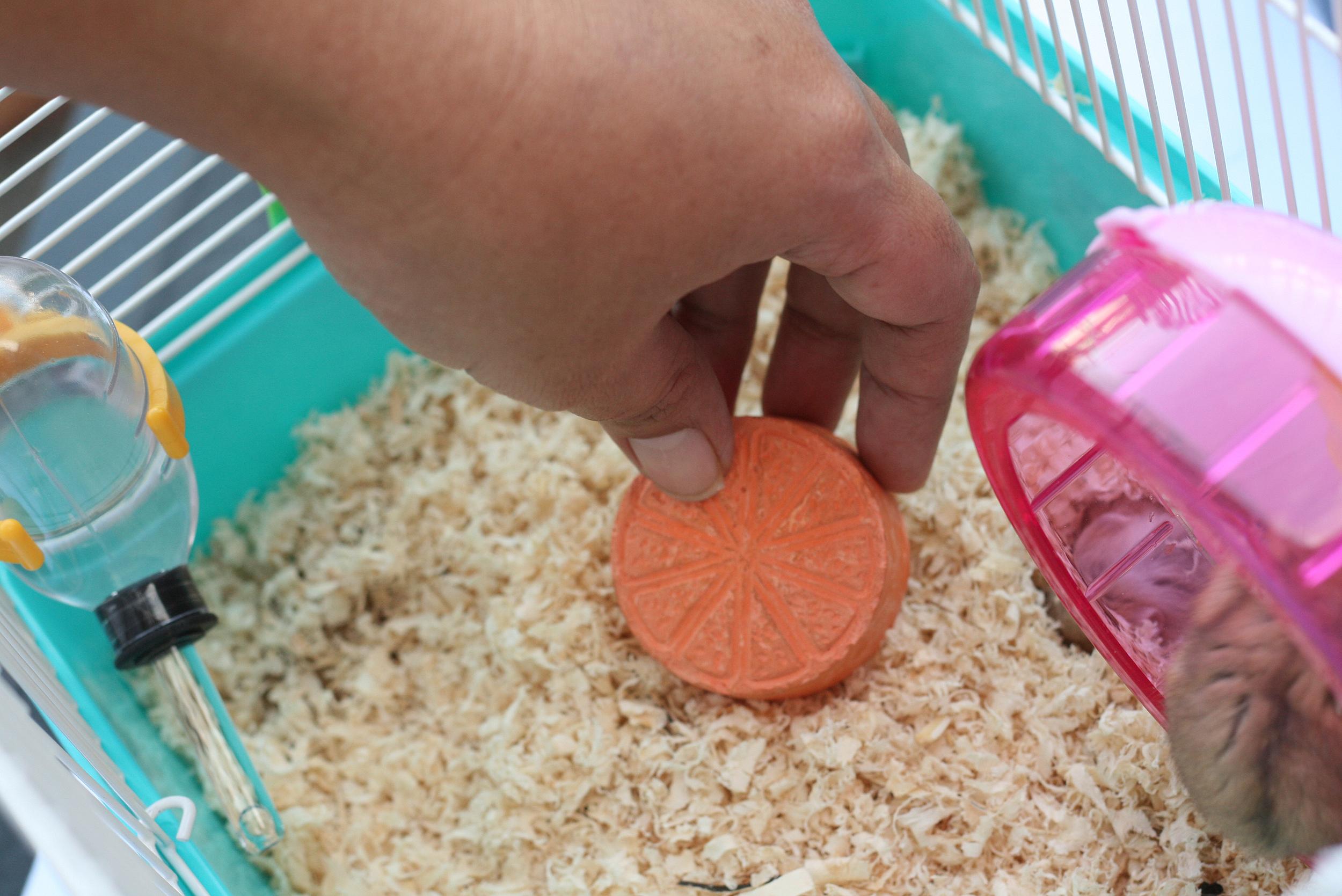 Как ухаживать за хомяком — рекомендации для начинающих