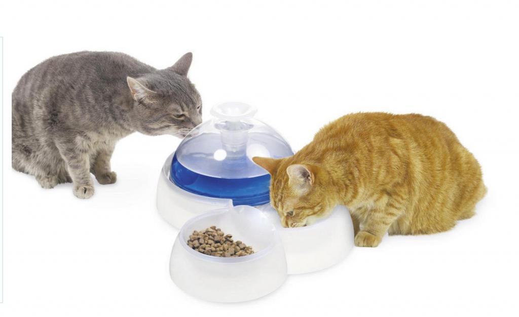 Вода и еда: сколько необходимо кошке
