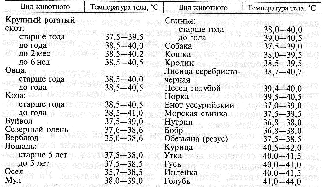 Температура тела кошки: какая считается оптимальной и критической