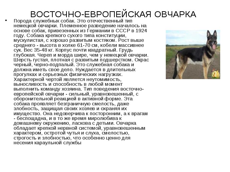 Восточноевропейская овчарка: характеристика породы