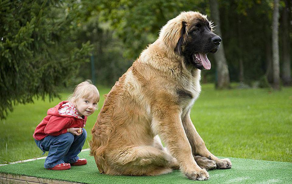 Самые добрые собаки в мире: добрейшая десятка
