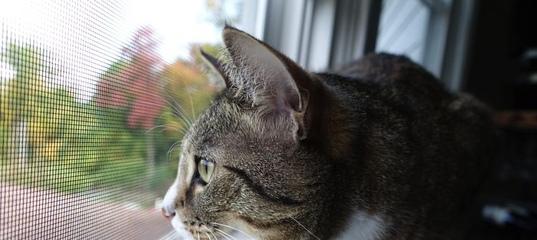 Защита на окна от выпадания кошек
