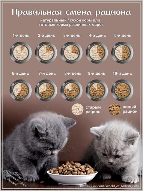Натуральный рацион для кошек: принципы правильного питания