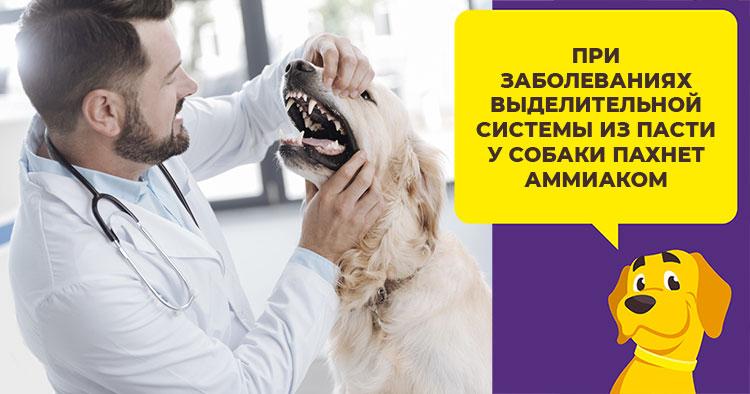 Неприятный запах изо рта собаки