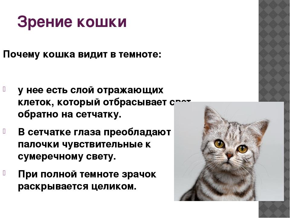 Окружающий мир глазами кошки: особенности кошачьего зрения