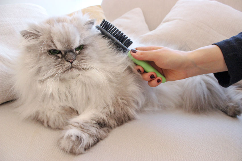 Машинка для стрижки кошек