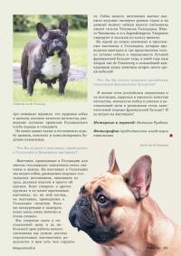 Полезные советы по уходу за французскими бульдогами