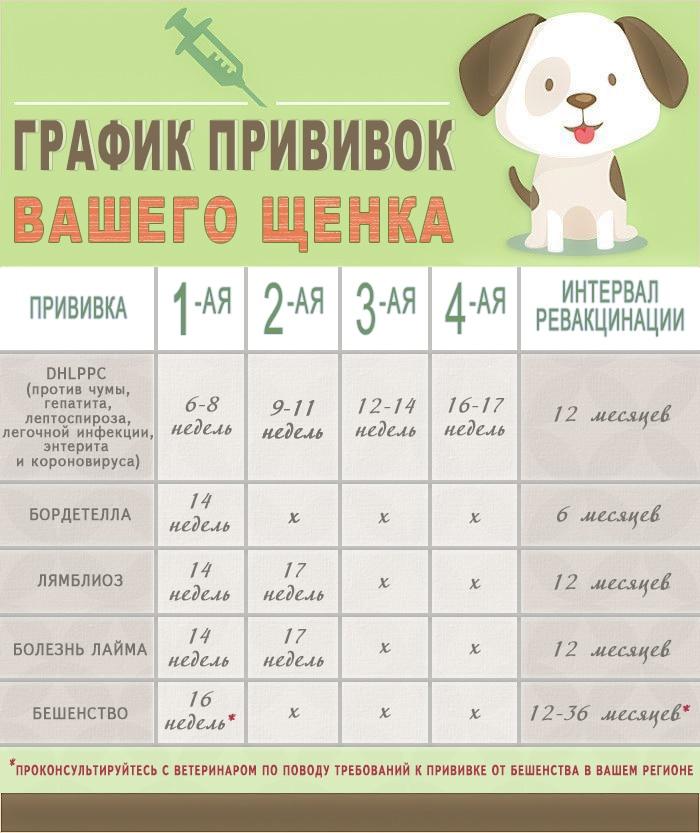 Можно ли мыть собаку после прививки: через сколько разрешается