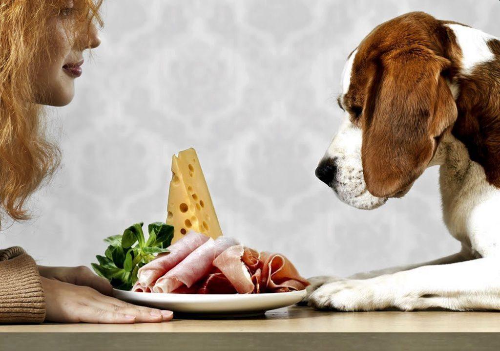 Собака не ест сухой корм: что делать, если раньше ела