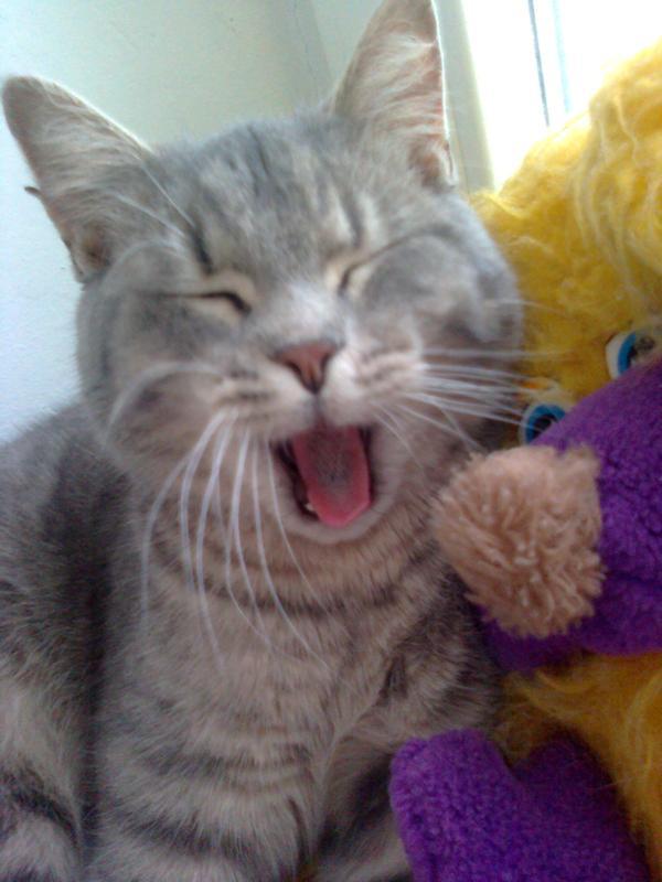 Кот показывает язык: основные причины и что это значит