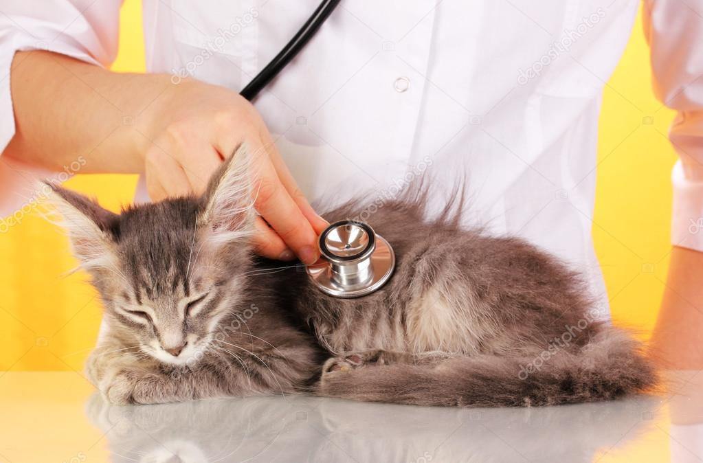 Лысые кошки: история породы и особенности содержания