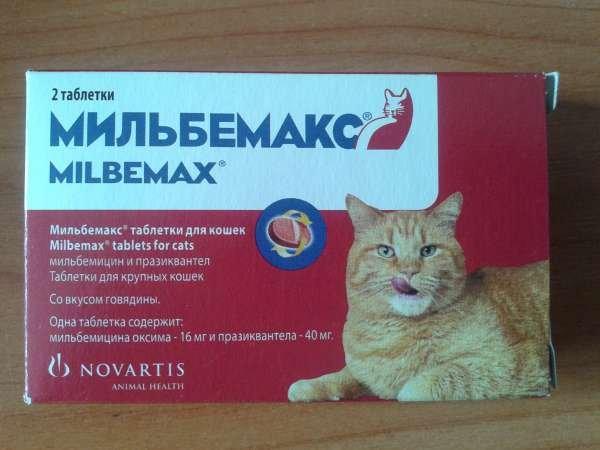 Препарат Имунофан: средство для стимуляции иммунитета кошки