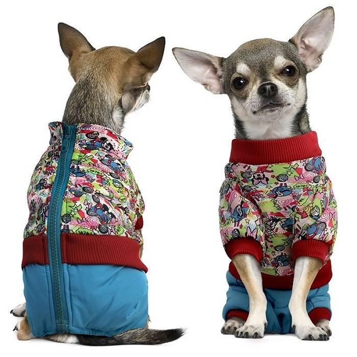 Одежда для чихуахуа для девочек и мальчиков