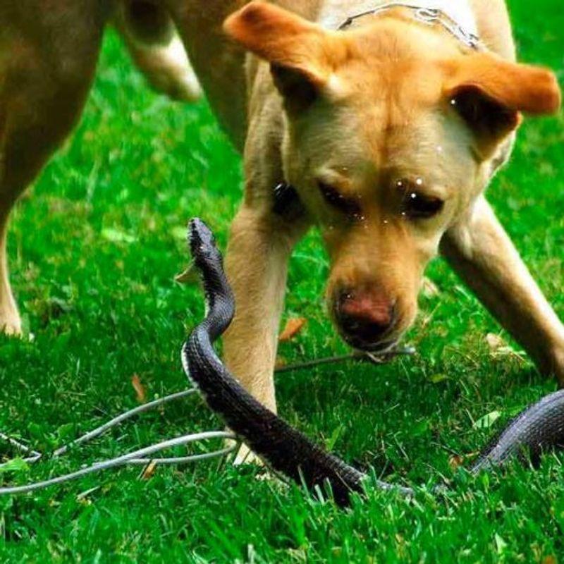 Собаку укусила оса в лапу или морду: что делать