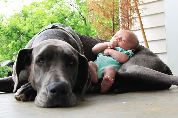 Породы собак для детей: какую лучше завести