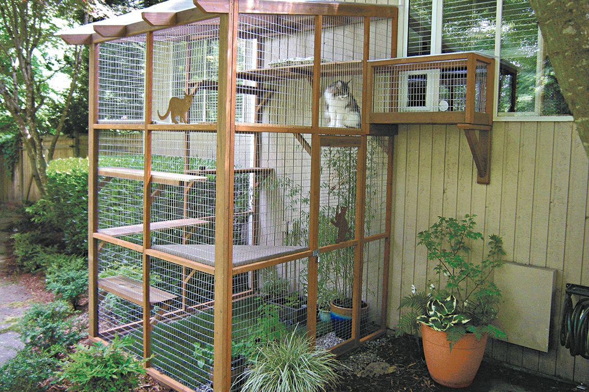 Вольер для кошек на даче или в квартире своими руками