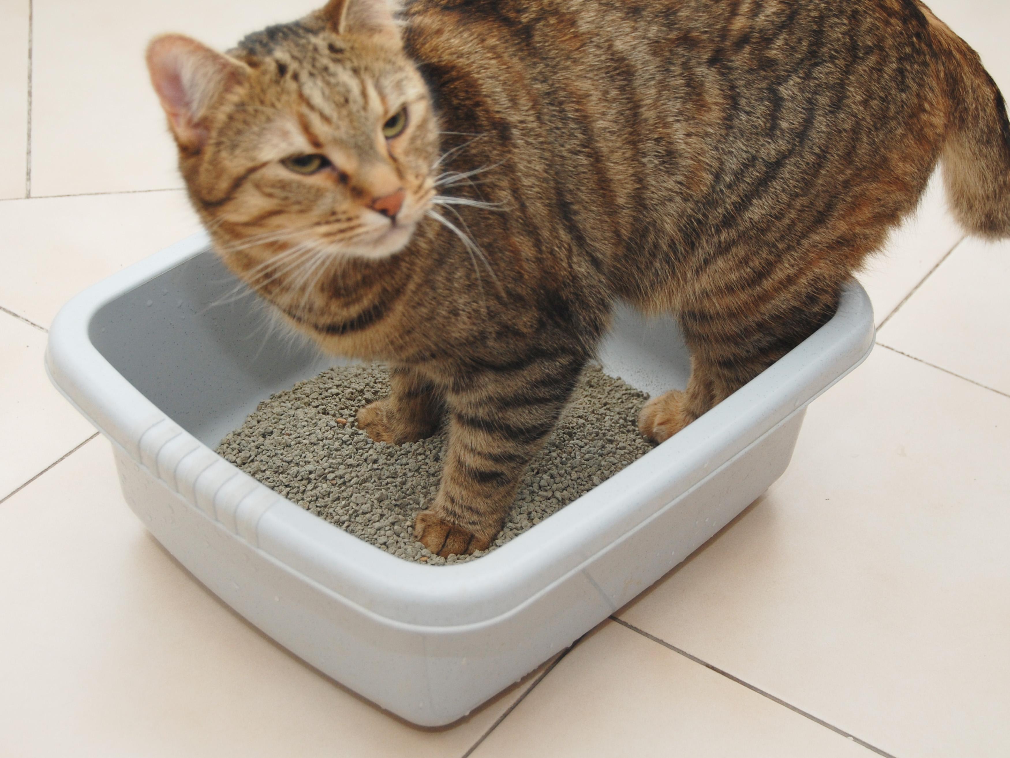 Котенок не пьет воду — варианты как приучить питомца