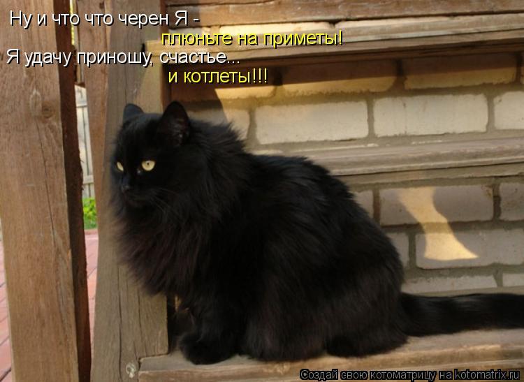 Черная кошка примета: значение и что приносит в дом