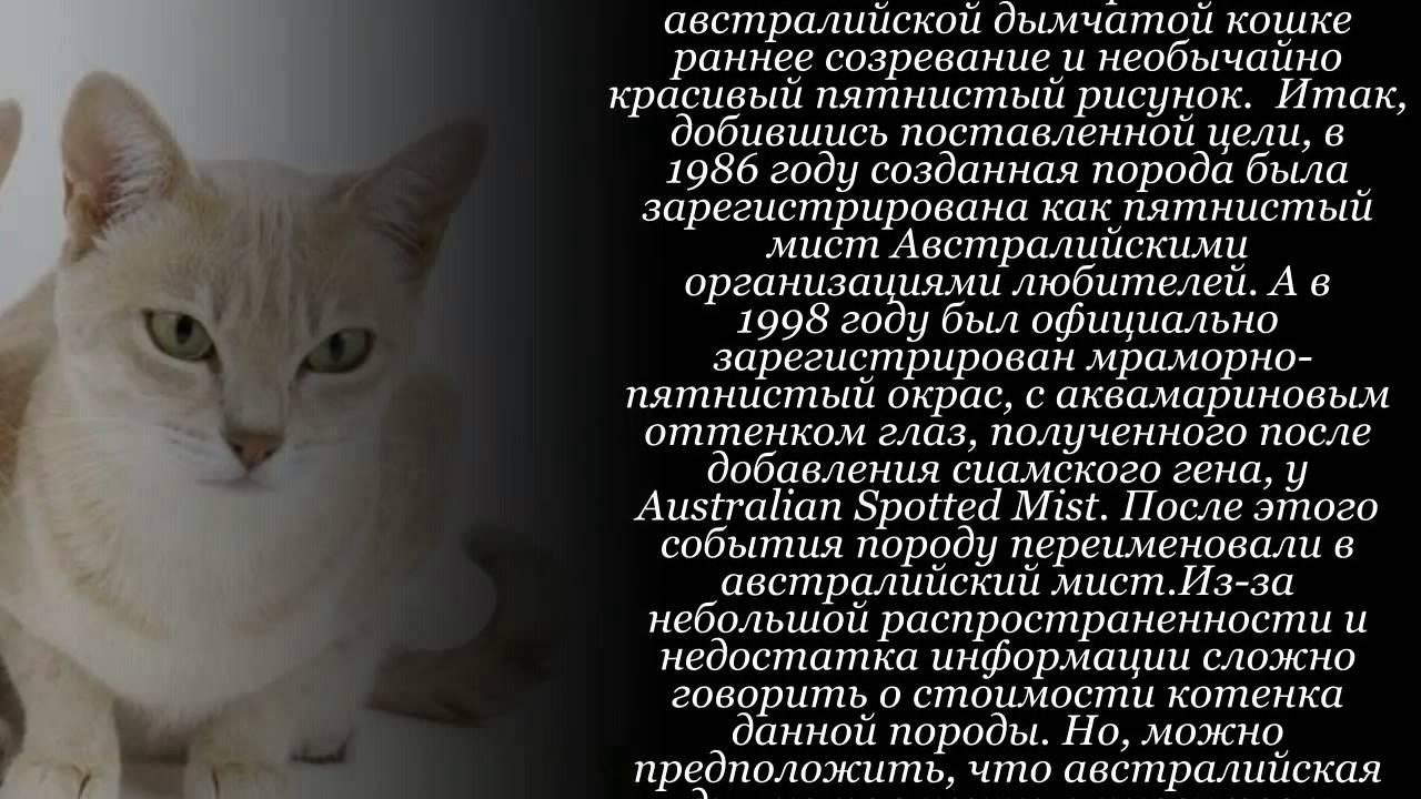 Австралийский мист (австралийская дымчатая кошка)