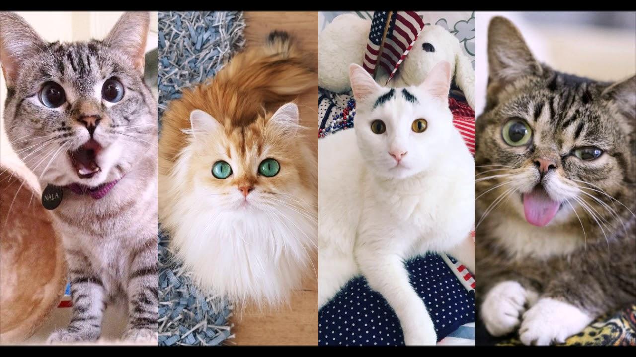 10 знаменитых котов, покоривших социальные сети