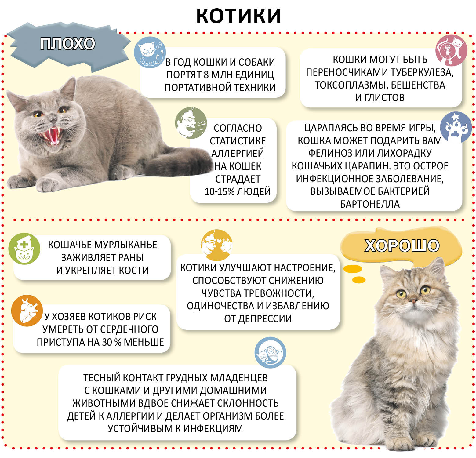 До какого возраста растут коты и кошки — особенности взросления