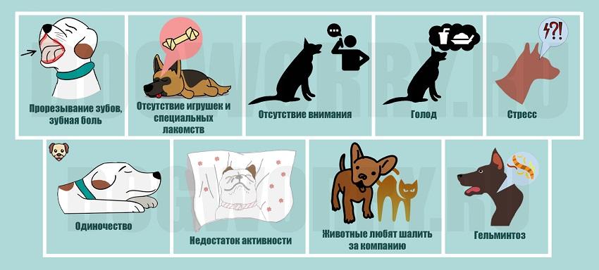 10 причин, почему кошек содержать проще, чем собак