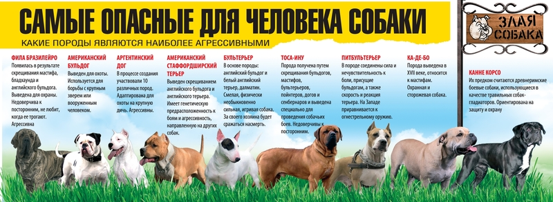 Опасные породы собак: что диктует российский закон