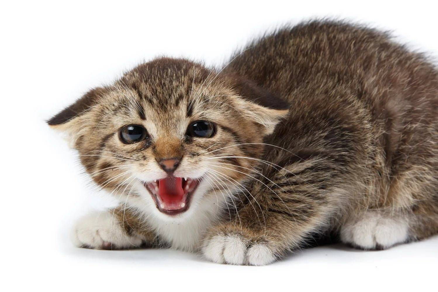 Кошачьи страхи и борьба с ними