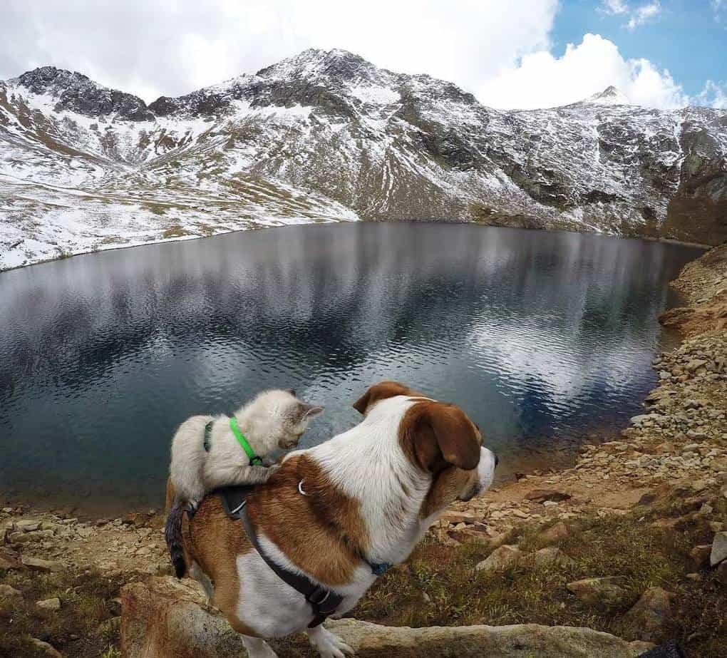 Лучшие породы собак для путешествий хоть на край света
