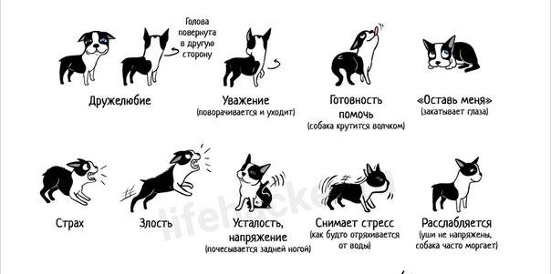 Понимает ли собака слова?