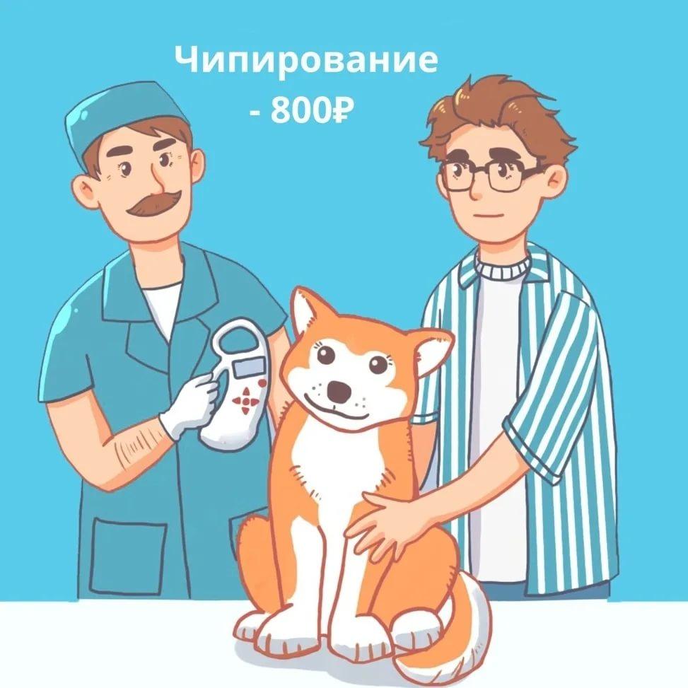 Чипирование кошек: да или нет