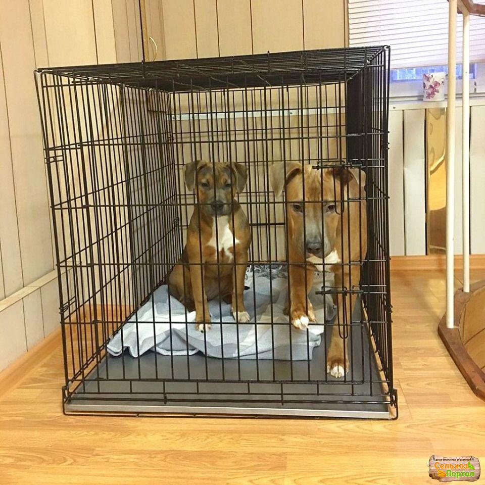 Сколько стоит передержка собаки в сутки