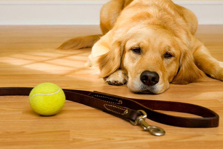 Если собака грустит: 7 способов улучшить настроение питомца