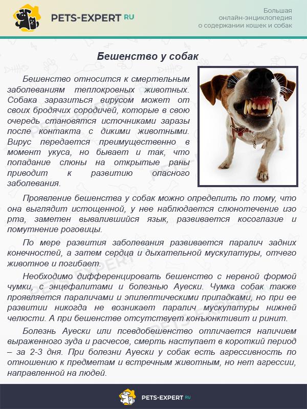 Территориальная агрессия у собак