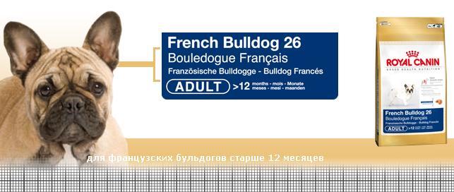 Чем кормить французского бульдога в домашних условиях