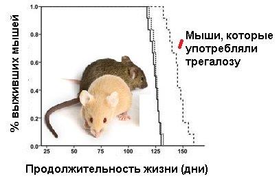 Сколько живут хомяки — как увеличить продолжительность жизни