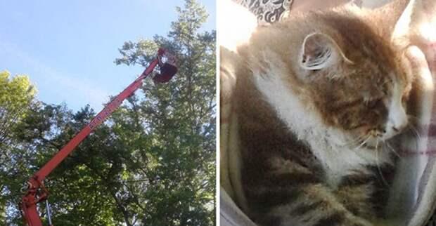 Как снять кота с дерева: действенный способ