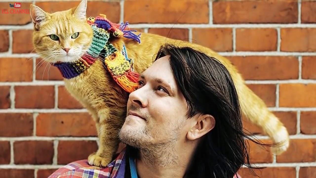 ТОП-10 знаменитостей, неравнодушных к кошкам