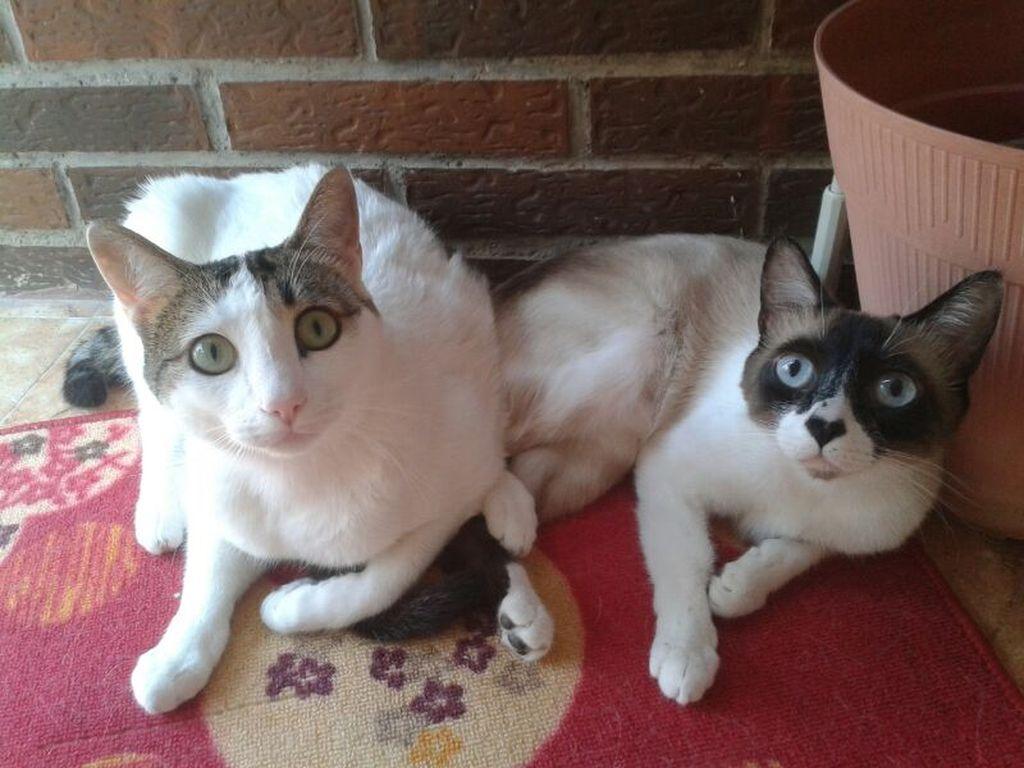 Половое созревание у котов и кошек: когда наступает
